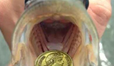YOUR COIN IS IN THE MOUTH OF A FISH
